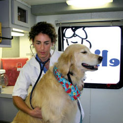Animal Attraction:  Women apply caring and compassion to veterinary medicine
