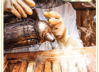 Sustainable Gardening: Bees & Their Keepers