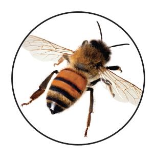 SustainableGarden-Bee2