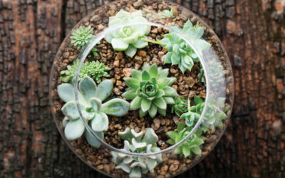 Sustainable Gardening: Green Gifts for Nature Lovers