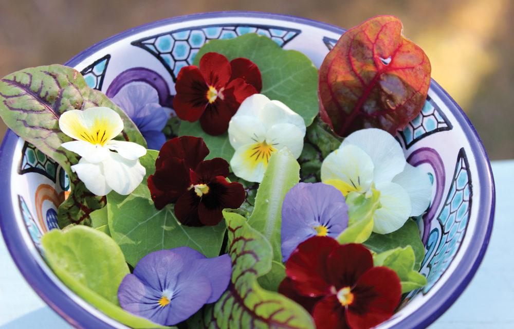 Flowering Spring Plants