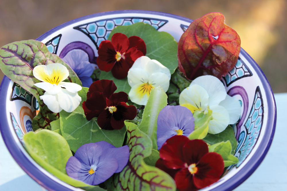Flowering spring plants san antonio woman magazine perhaps it was to grow something new or eat more produce from your garden its not too late to plant a spring garden with flowering herbs mightylinksfo