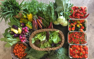 5 Permaculture Steps for the Home Gardener