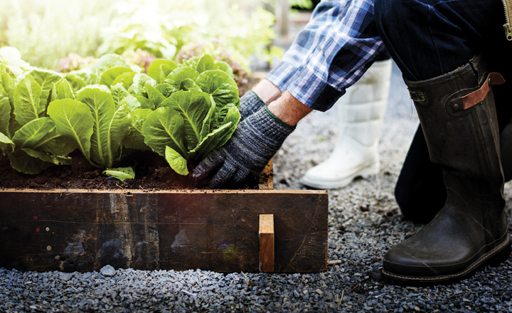 Planting a Summer Garden in South-Central Texas Takes Planning
