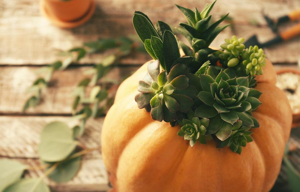 How to Make a Pumpkin Succulent Centerpiece